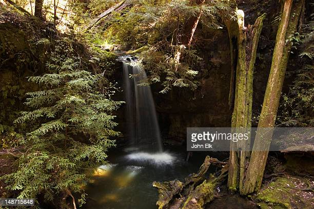 waterfall. - big basin redwoods state park stock pictures, royalty-free photos & images
