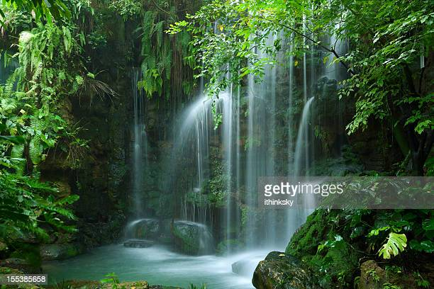 waterfall - tropical rainforest stock pictures, royalty-free photos & images