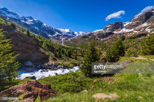 torrente a cascata nella valle delle montagne innevate nel parco nazionale dello stelvio, forni –valfurva, alpi italiane - valle d'aosta foto e immagini stock