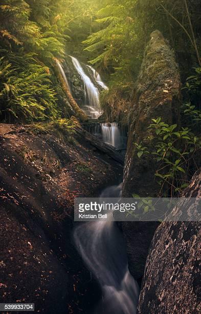 Waterfall, stream, rocks and lush vegetation in Victoria, Australia