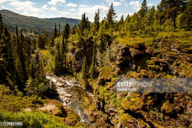 waterfall through nordic forest - rachel wolfe stock photos and pictures