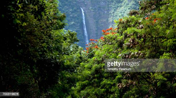waterfall, tulip tree in a classic tropical landscape - timothy hearsum stock-fotos und bilder