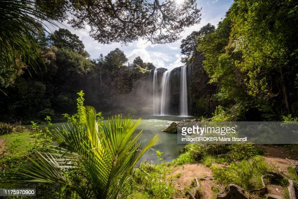 waterfall, whangarei falls, river hatea, whangarei falls scenic reserve, northland, north island, new zealand - whangarei heads stock pictures, royalty-free photos & images