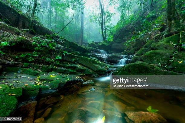 waterfall (saithip waterfall) with stone of green moss in autumn forest - lush stock pictures, royalty-free photos & images