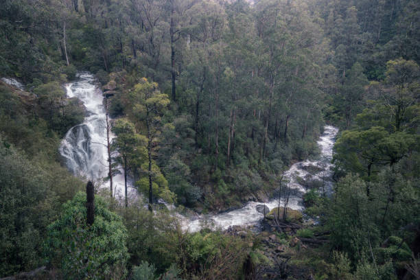 Waterfalls (Rubicon Falls) and forest in south east Australia