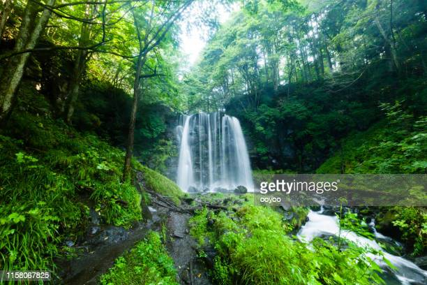 waterfalls and mountain stream in the forest - spring flowing water stock pictures, royalty-free photos & images