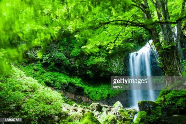 森の滝 - 栃木県 ストックフォトと画像