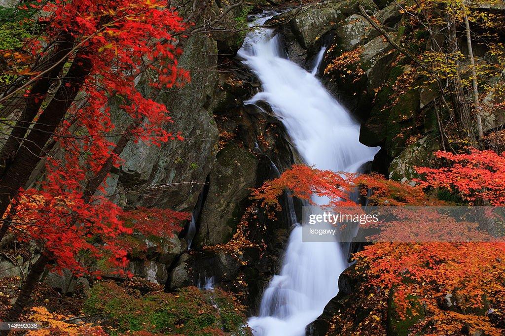 Waterfalls : ストックフォト