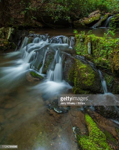 Waterfalls, Rhododendron Creek, Smokies