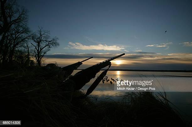 waterfowl hunters a sunrise - 水鳥 ストックフォトと画像