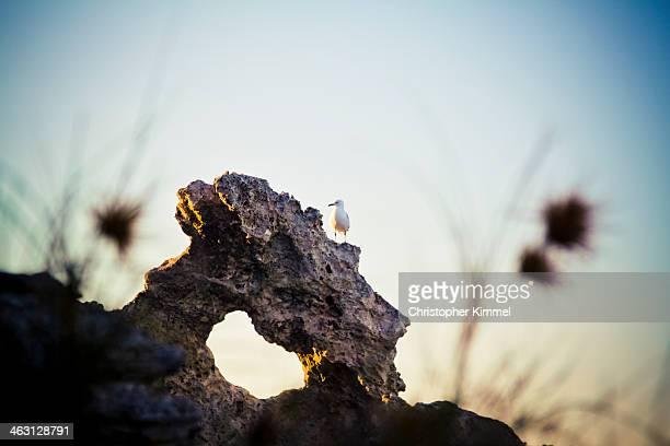 Waterfowl on rock