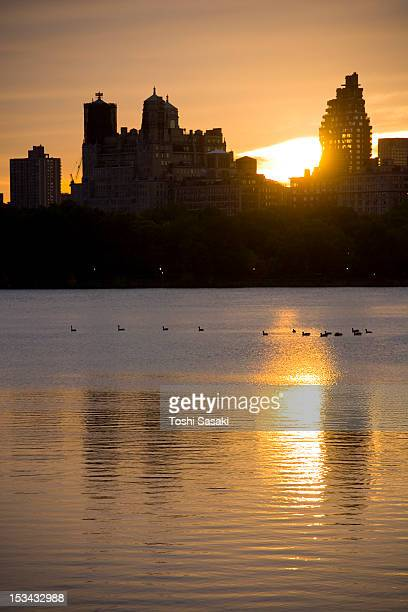 waterfowl resting on central park reservoir - central park reservoir stock pictures, royalty-free photos & images