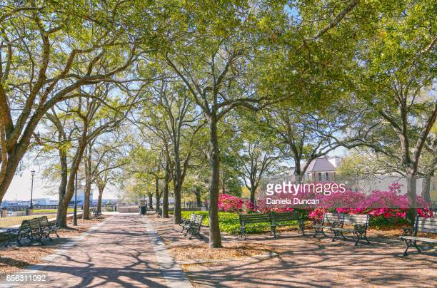 waterfront park downtown charleston - template_talk:south_carolina stock pictures, royalty-free photos & images