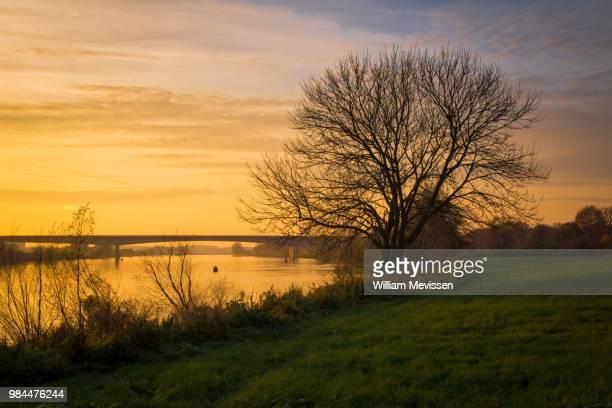 waterfront tree 'autumn' - william mevissen stockfoto's en -beelden