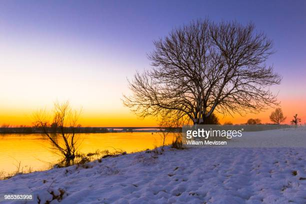 waterfront tree 'winter' - william mevissen foto e immagini stock