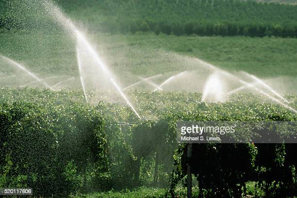watering a vineyard - sprinkler system stock pictures, royalty-free photos & images