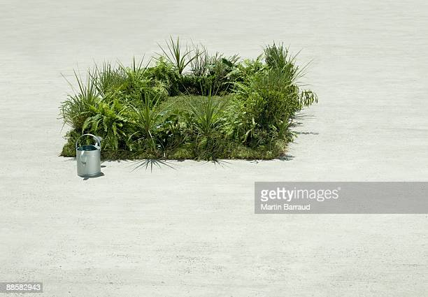 Watering can and lush lawn in cement courtyard