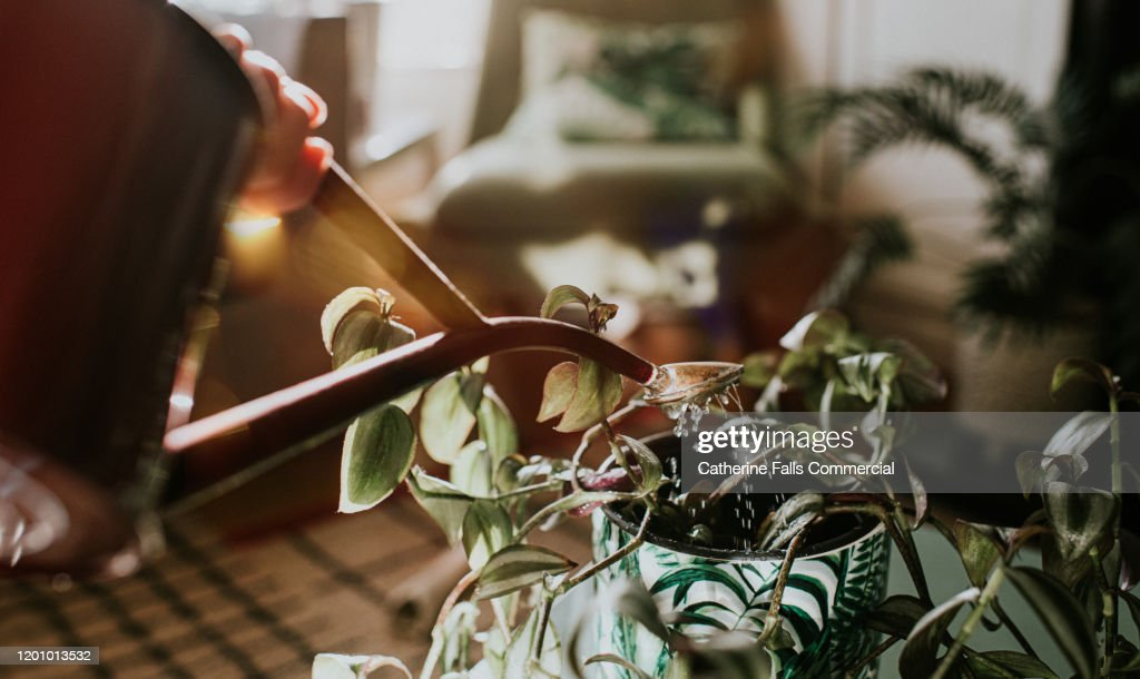 Watering Can : Stock Photo