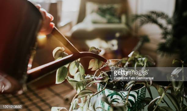 watering can - watering stock pictures, royalty-free photos & images