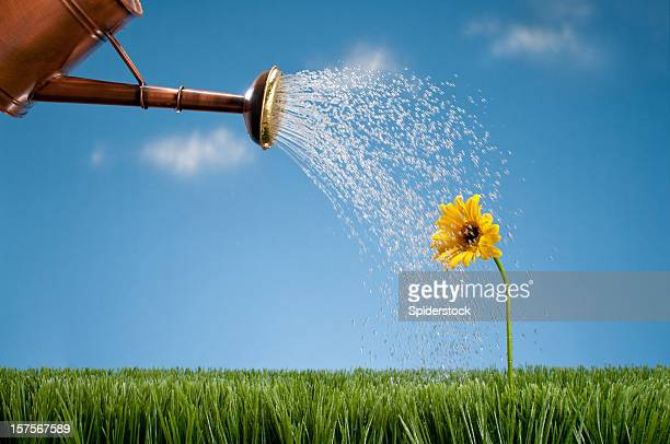 Watering Can Showering A Gerbera Daisy