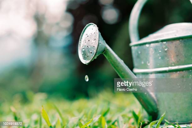 watering can water drops on garden grass - watering stock pictures, royalty-free photos & images