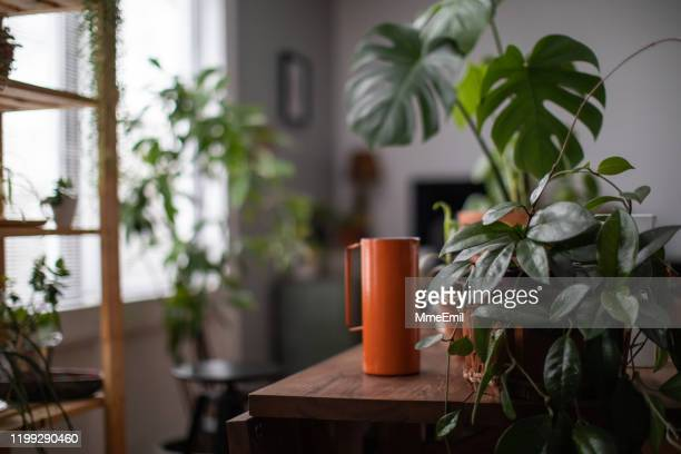 watering houseplant, indoors gardening concept - pot plant stock pictures, royalty-free photos & images