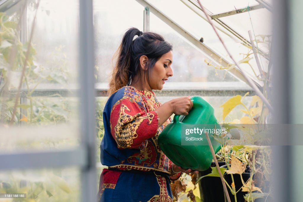 Watering In The Greenhouse : Stock Photo