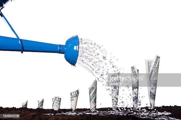 watering money to make it grow - money tree stock photos and pictures