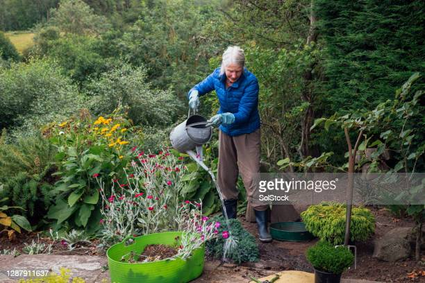 watering my new tree - biodiversity stock pictures, royalty-free photos & images