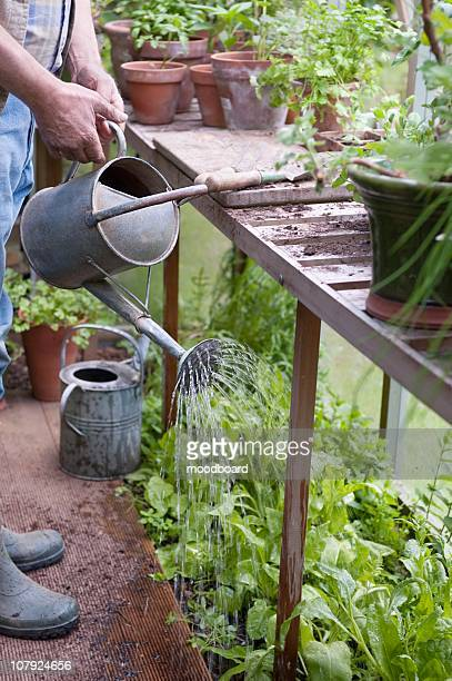 watering plants in a potting shed - streatham stock pictures, royalty-free photos & images