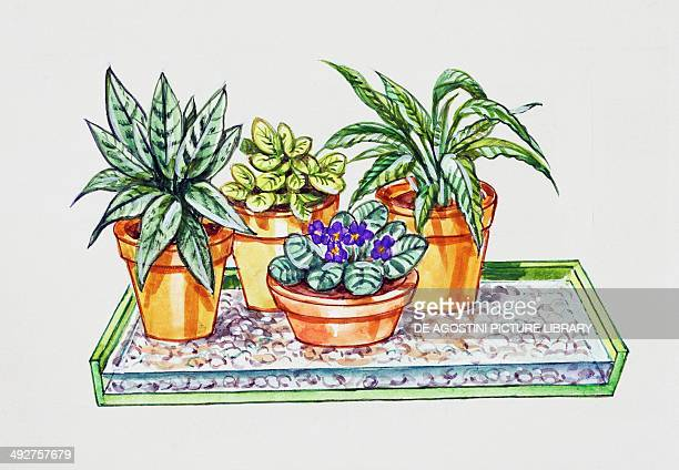 Watering plants in pots using a container with water and gravel illustration