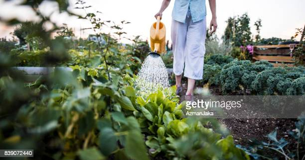 watering plants in the garden - watering stock pictures, royalty-free photos & images