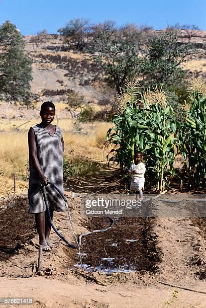 Watering Soil in Cornfield in Zimbabwe