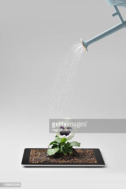 Watering the flowers on digital tablet