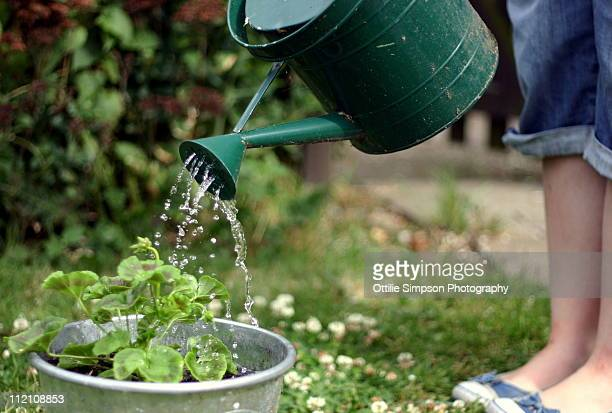 watering the garden - watering stock pictures, royalty-free photos & images