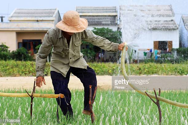 watering the garlic field - quảng ngãi stock pictures, royalty-free photos & images