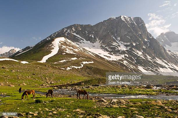watering the horses in the mountains of kashmir - kashmir valley stock photos and pictures