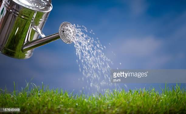 Gießen dem Rasen