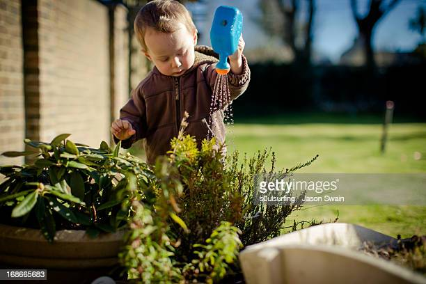 watering the plants, toddler style - s0ulsurfing stock pictures, royalty-free photos & images