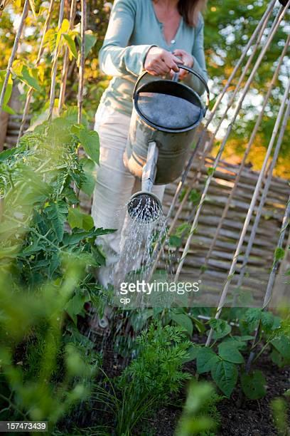 Watering the Vegetable Garden
