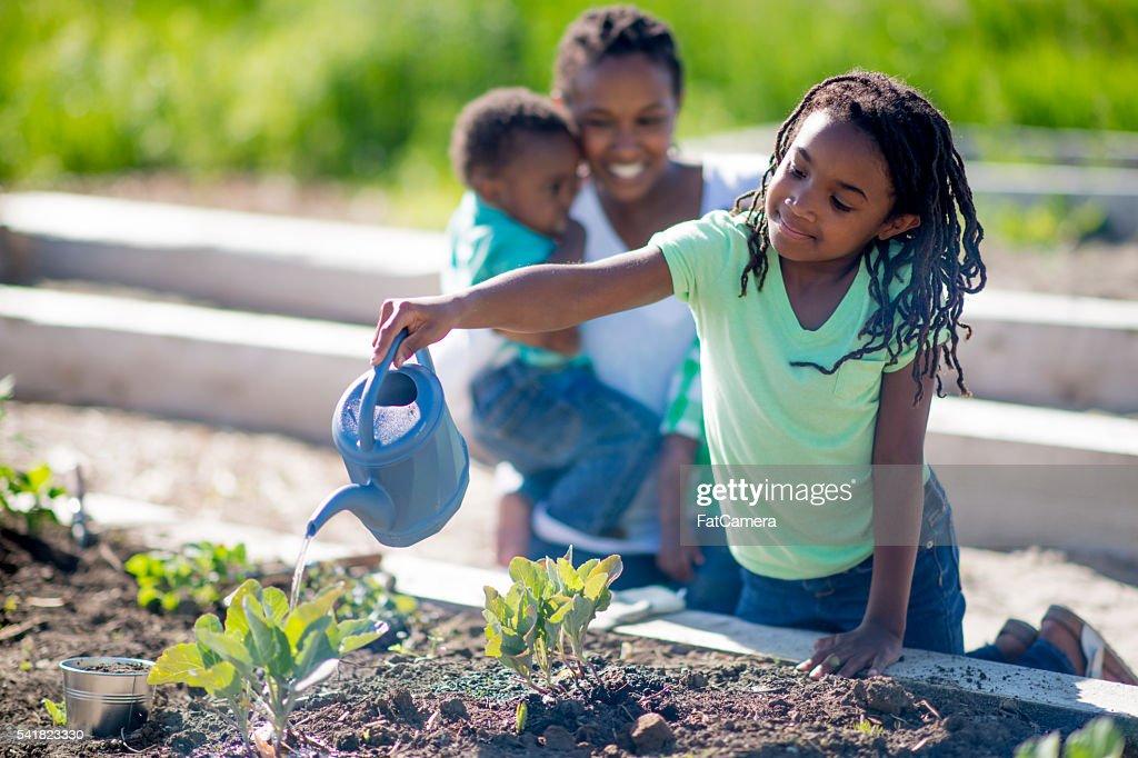 Watering the Vegetable Garden : Stock Photo
