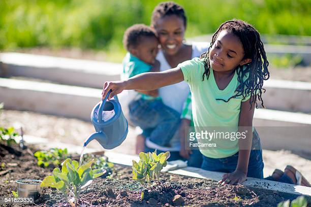 watering the vegetable garden - watering stock pictures, royalty-free photos & images