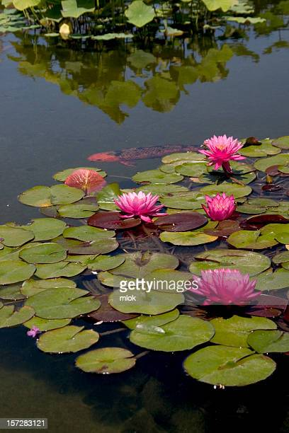 Waterlilies and Koi II