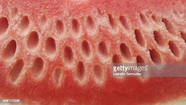 Watermellow slice