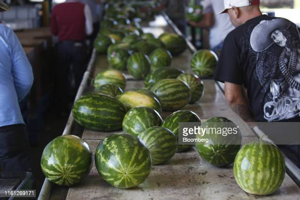 Watermelons move down a conveyor belt in a packing shed during a harvest at Frey Farms Inc in Poseyville Indiana US on Thursday Aug 1 2019 Overall...