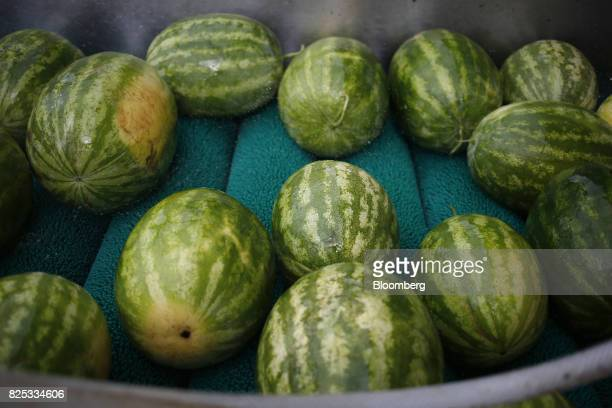 Watermelons roll down a conveyor belt at Frey Farms in Poseyville Indiana US on Tuesday Aug 1 2017 Increases in domestic production of watermelons...