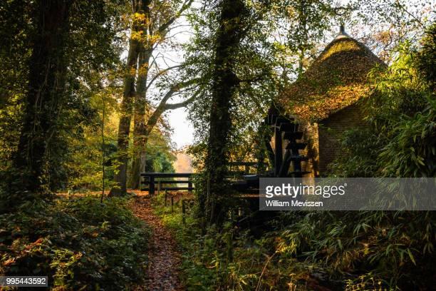watermill 'rosmolen' - william mevissen bildbanksfoton och bilder
