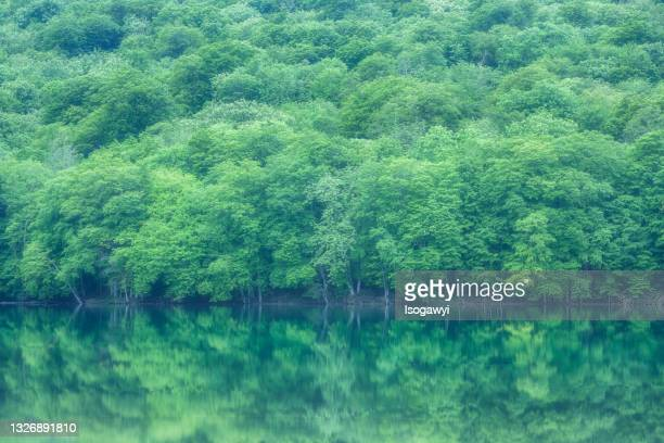 waterside green forest - isogawyi stock pictures, royalty-free photos & images