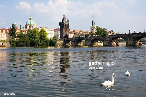 waterside view of charles bridge, swans swimming in the foreground, prague, czechoslovakia, czech republic, europe - vltava river stock pictures, royalty-free photos & images