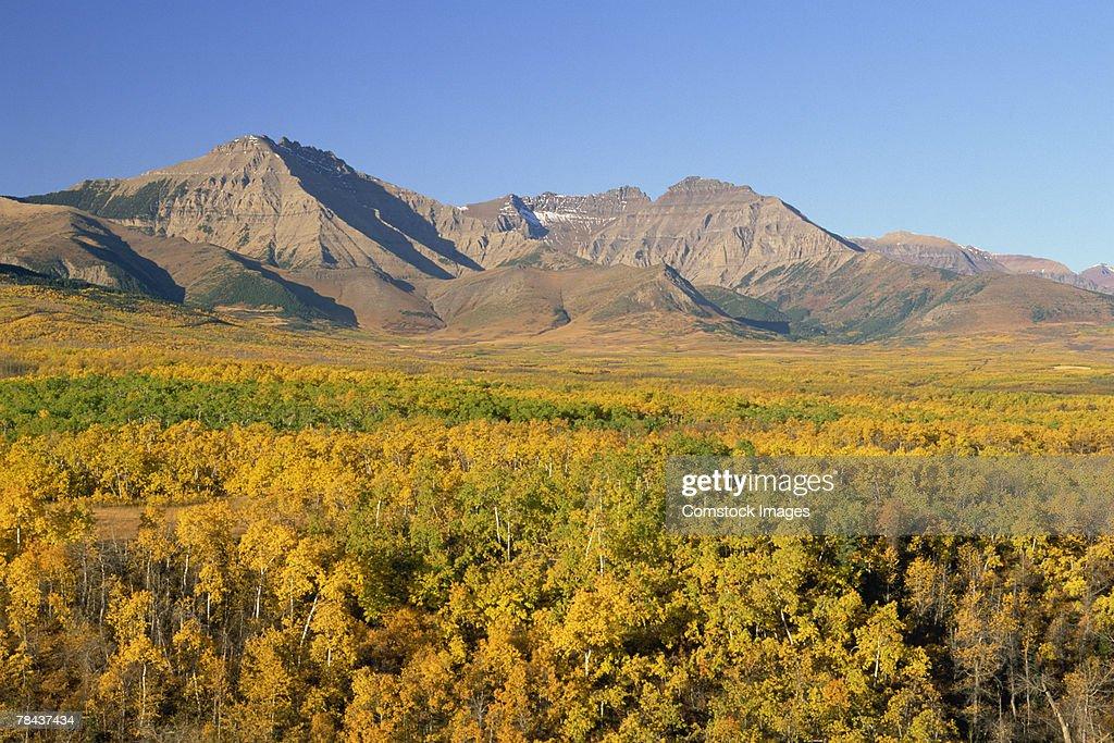 Waterton Lakes National Park , Alberta , Canada : Stockfoto